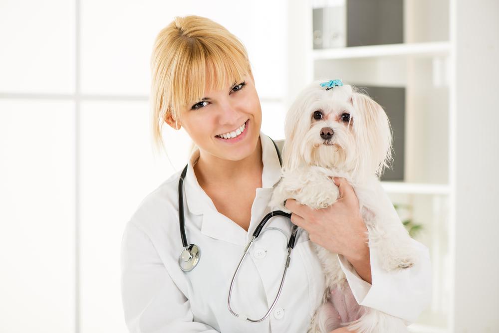 Весь спектр ветеринарного оборудования - в